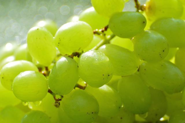 hroznové víno, zelené
